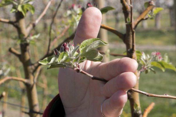 Understanding the click pruning technique – Video
